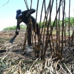 Bioenergie und Agrarkraftstoffe in Brasilien (und anderswo)