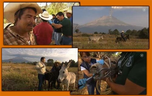 Weltspiegel: Tierschutz für Esel in Mexiko